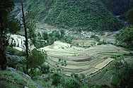 Rice terraces on the Chirbatia pass near Tilwara