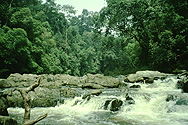On a river in Taman Negara national park