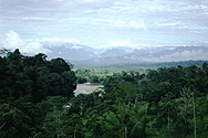 In the tropical forest near Misahuallí, view westwards to the Andes