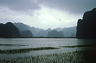 Paddy fields in Hoa Lu in North Vietnam